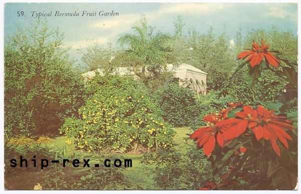 Bermuda, Typical Fruit Garden - postcard